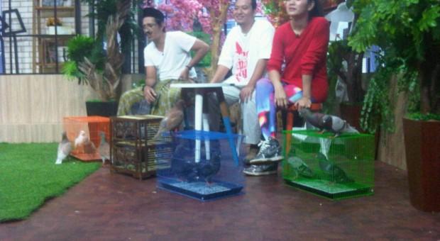 Komunitas Merpati.org di  acara Pagi Pagi NET TV