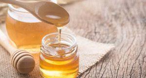 Manfaat madu untuk merpati lomba